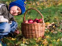Æblepresning