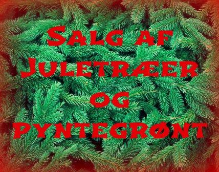 Juletræer og pyntegrønt