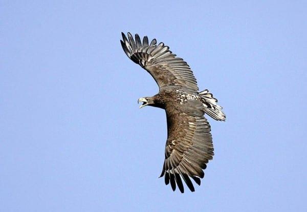 Ørnens dag