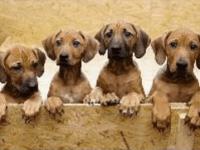 Skal din hund have hvalpe?