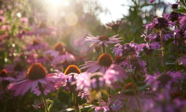 Blomster for evigt