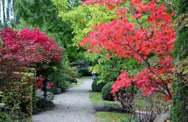 Den Japanske Have