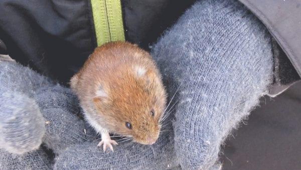 Mus og andre dyr i vinterlandskabet