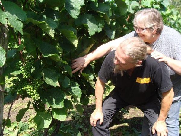 Vinproduktion i Gørlev