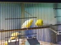 Vind foder til din fugl