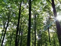 Musholm støtter Danmark planter træer
