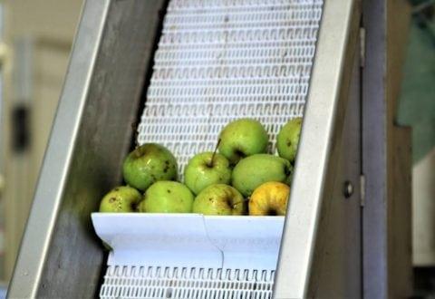Et lille udpluk af æbler