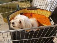 Lisbeth og Jens Steensgaard fra Holstebro er nogle af dem, der sparer op ved at sælge ud af de ting, som de ikke selv bruger mere. For to år siden bookede de en stand i loppesupermarkedet Kirppu på Lundholmvej i Holstebro, hvorfra de kunne sælge deres ting. Og overskuddet herfra skulle gå til opsparingen til en hund. Salget gav pote. I dag har parret hunden Rosa, der netop har fået hvalpe.