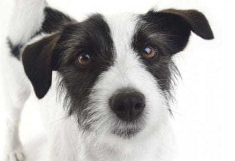 Kæledyrsdag i Ubby:  Efterlysning af børn, der vil udstille deres kæledyr i efterårsferien