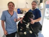 Dyrlæge Pia Nielsen med Nicky og hans ét og alt, labradorblandngen King, som allerede har fået hjælp af Frynseklinikken. Foto: Dyreværnet