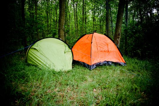 Flere skove med fri teltning