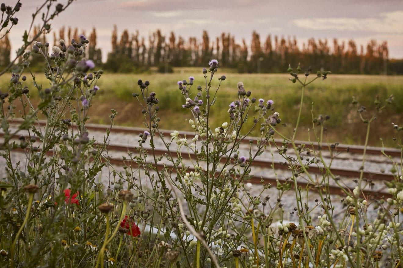Banedanmark vil hjælpe den vilde natur langs banen