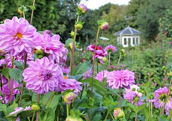Birkegårdens haver fik besøg af Joy Mogensen