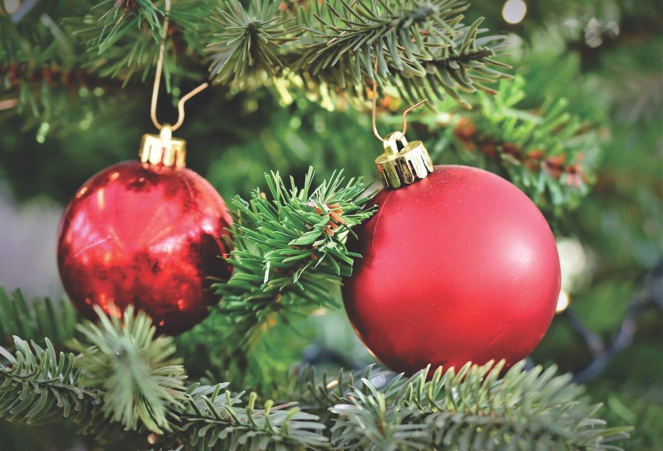Hjemmet invaderes af insekter i julen